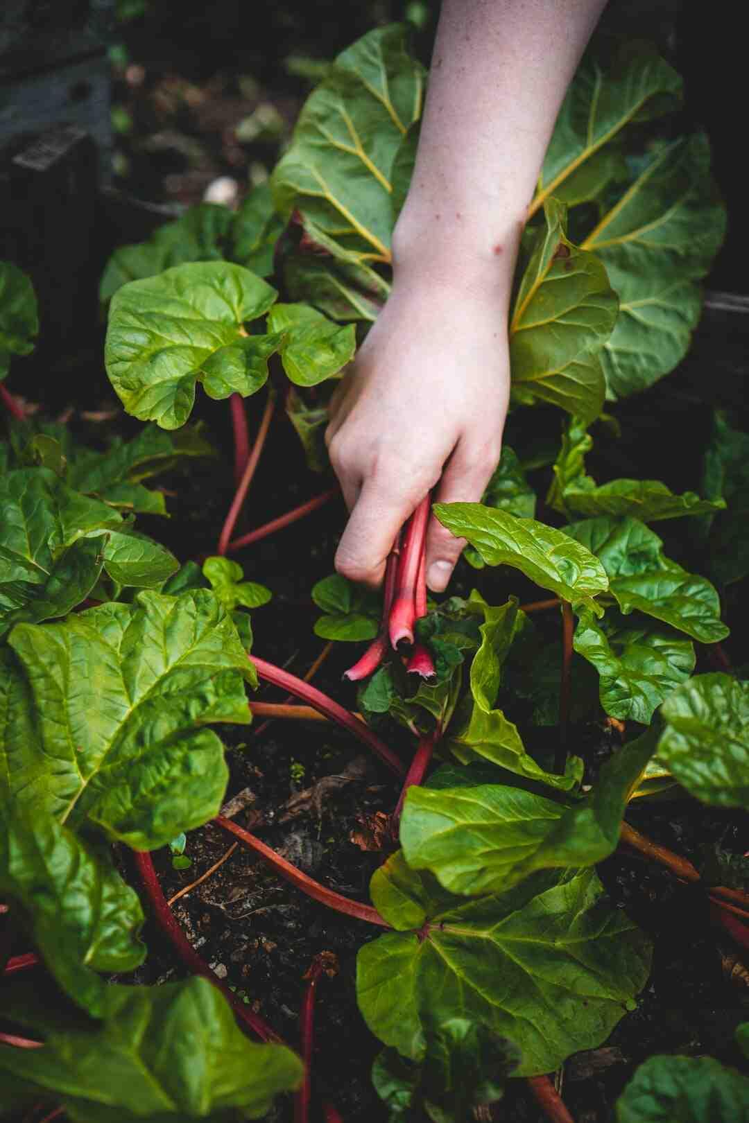 Comment créer un terrarium végétal (jardin en bouteille)