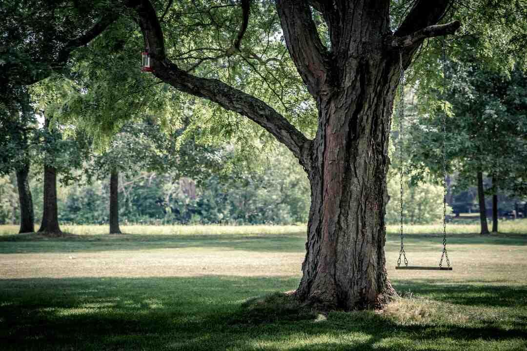 Comment élaguer un arbre en toute sécurité ?
