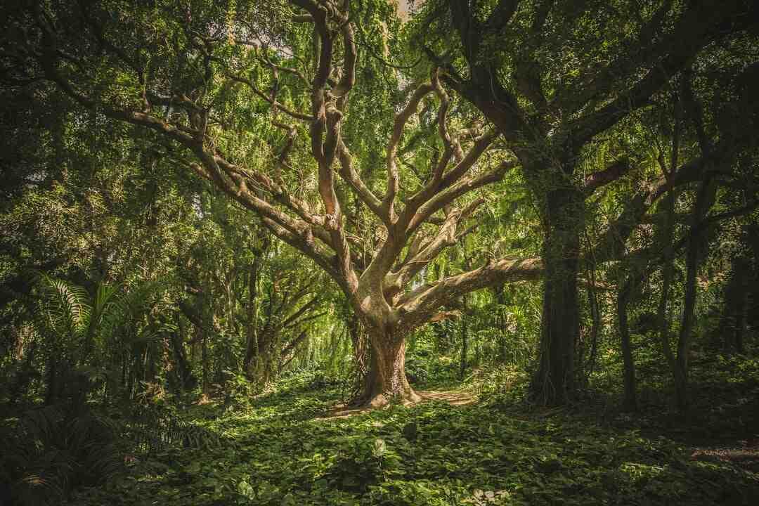 Comment élaguer un arbre