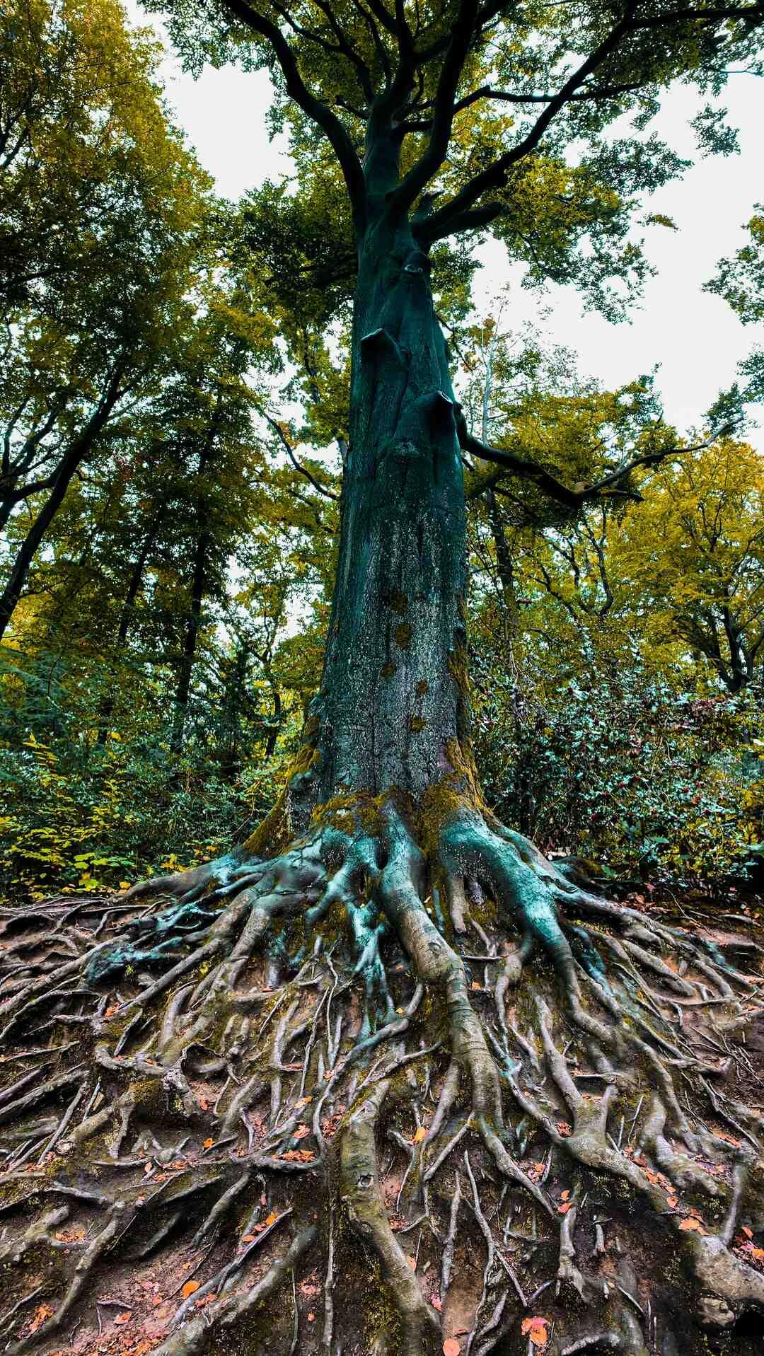 Comment se débarrasser de racines gênantes