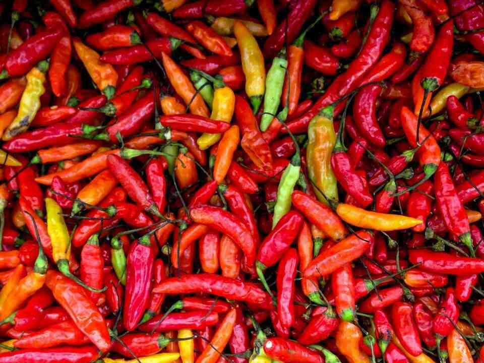 Comment cultiver des piments