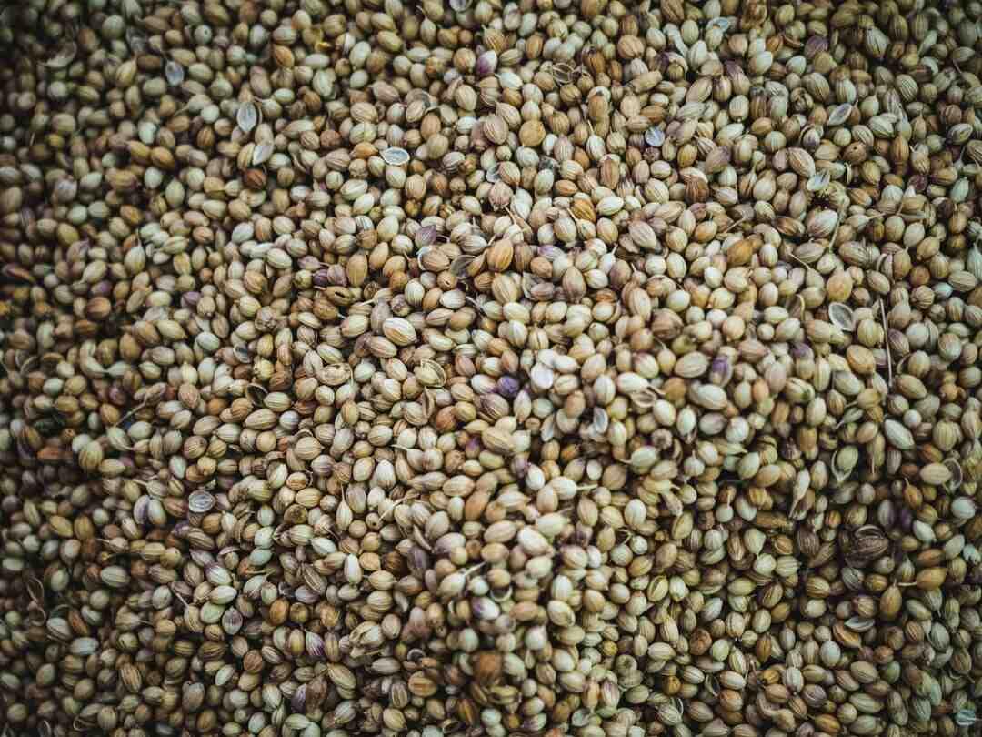 Comment faire pousser du canabis en intérieur à partir de graines