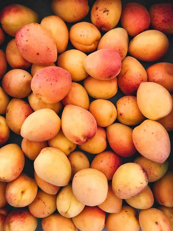 Comment faire pousser un manguier