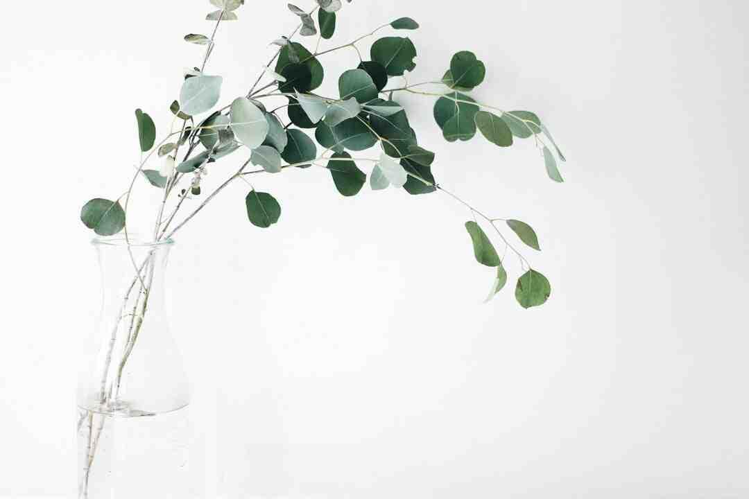 Comment récupérer les graines d'anthurium ?