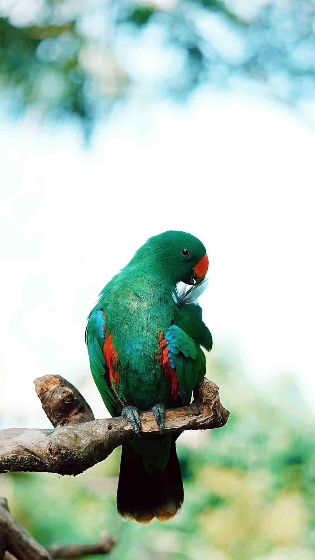 Comment tailler un oiseau de paradis