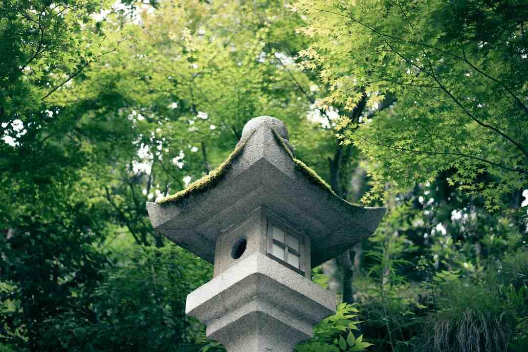 Erable du japon vert