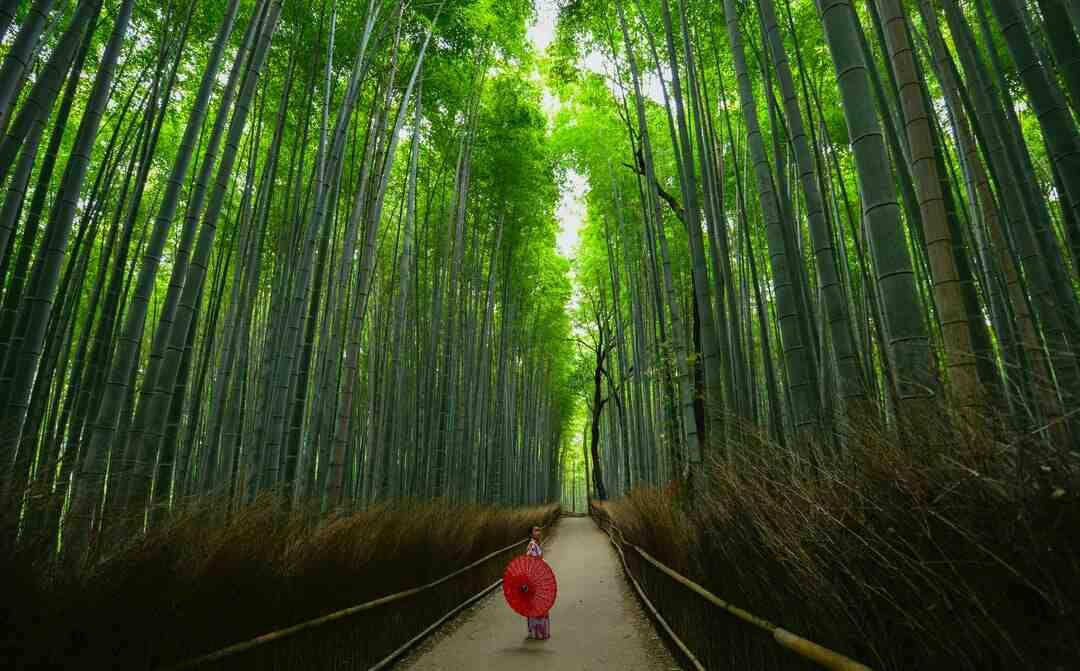 Quels sont les plus beaux érables du Japon ?